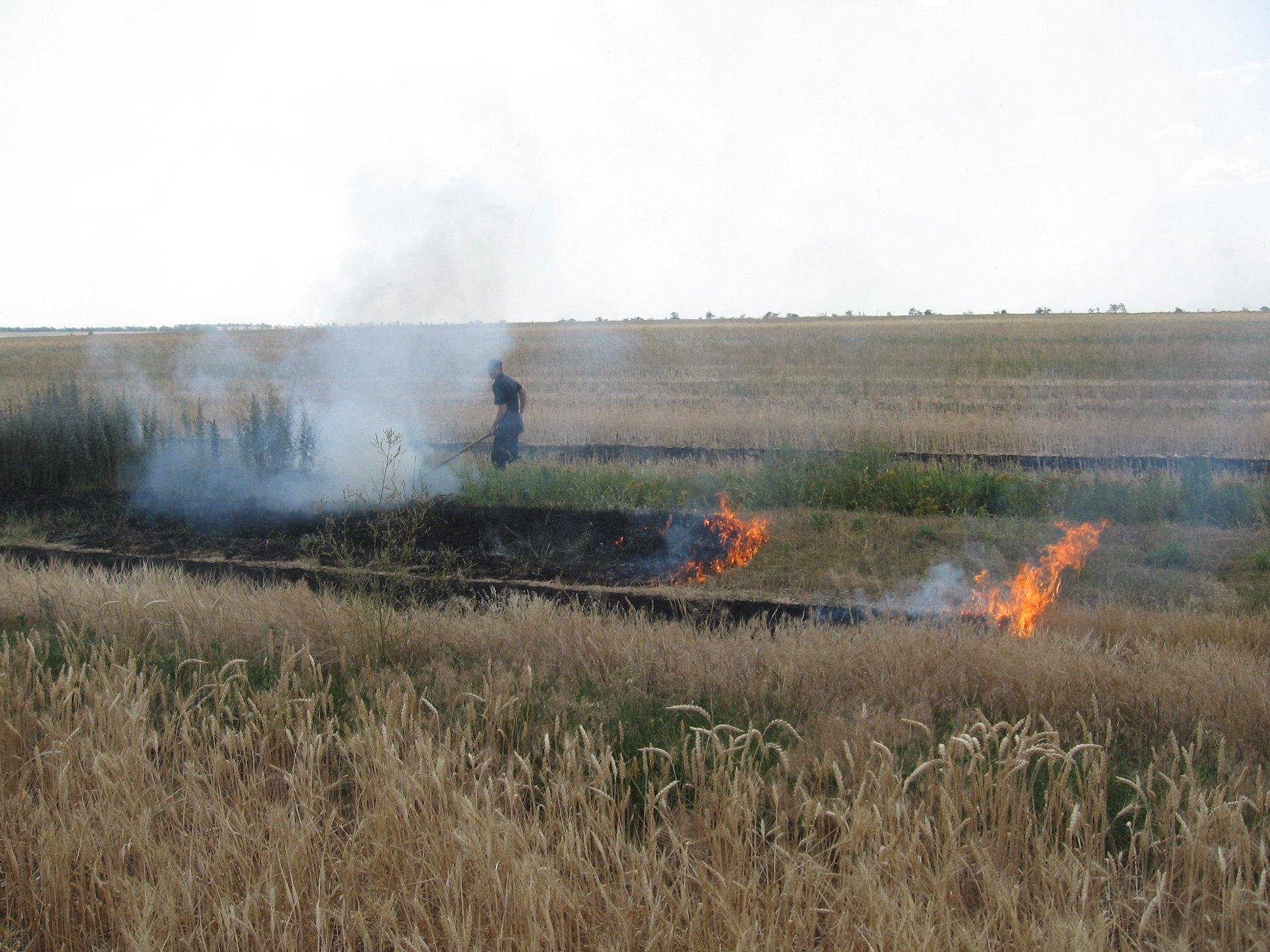 Работники белозерского предприятия после уборки урожая чуть не сожгли соседнее поле